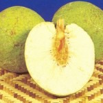 photos of breadfruit
