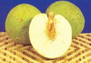 photos of breadfruit