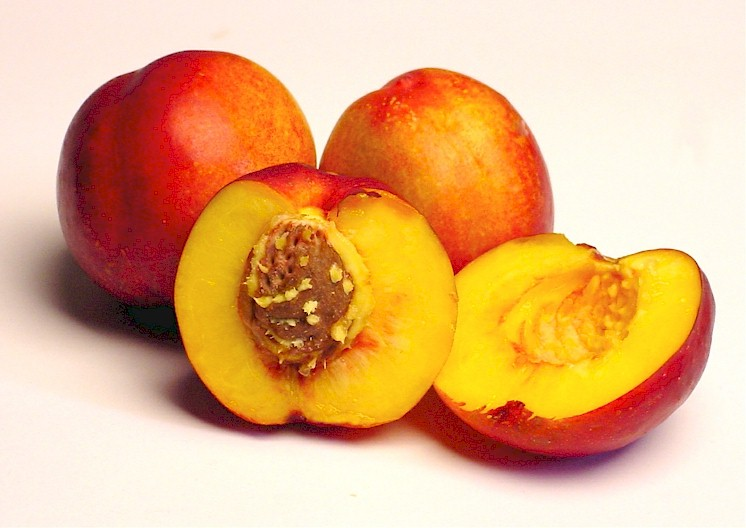 Nectarines Nutrition Calories Growing Season Health Benefits And Recipes Only Foods