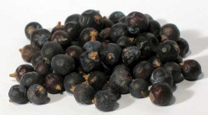 Juniper Berries Photos