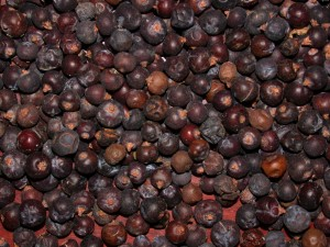 Pictures of Juniper Berries