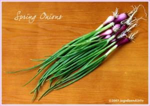 picture of spring onion