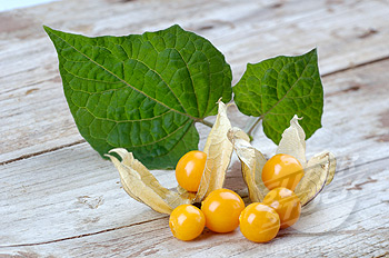 cape gooseberry leaves