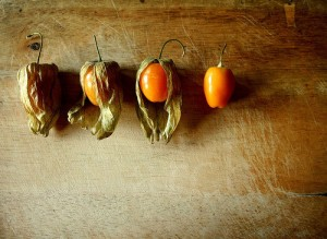pictures of cape gooseberry