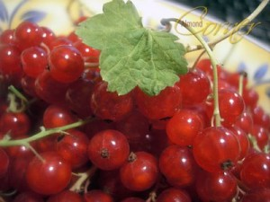 Picture of Red Currant