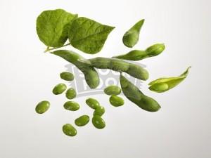 Image of Soya Beans