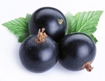 picture of black currant