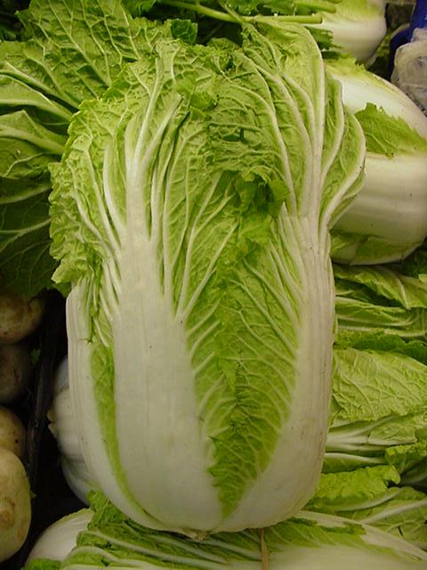 chinese cabbage Picture