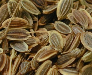 Dill Seed Photo
