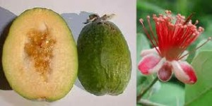 Picture of Feijoa