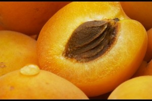 Pictures of Apricot Kernel
