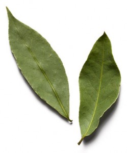 Pics of Bay Leaf