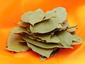 Bay Leaf Picture