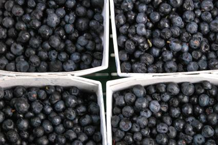 Bilberry Picture