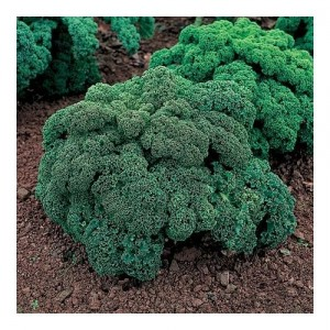 Images of Kale