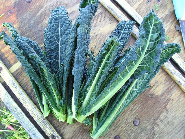 Kale Picture