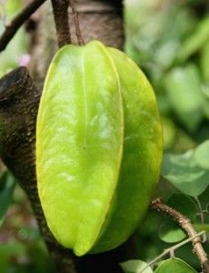Star Fruit Picture