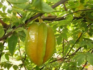 Images of Star Fruit