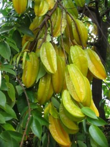 Pics of Star Fruit