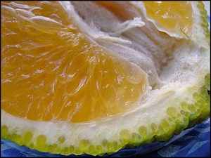 Photos of Ugli Fruit