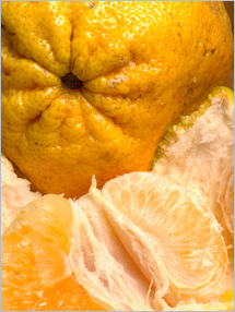 Pictures of Ugli Fruit
