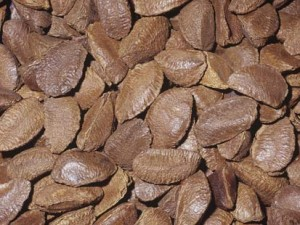 Pictures of Brazil nut