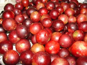 Images of Camu Camu