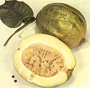 Pictures of Giant Granadilla