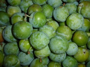 Greengage Picture