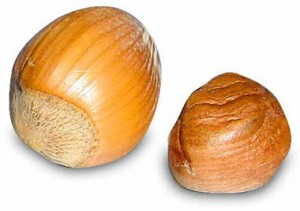 Hazel Nut Picture