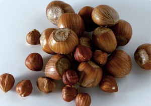 Photos of Hazel Nut