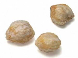 Pictures of Candlenut