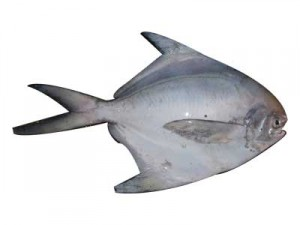 Pomfret Fish Picture