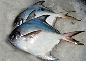 Pictures of Pomfret Fish