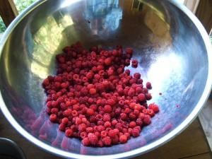 Photos of Thimbleberry