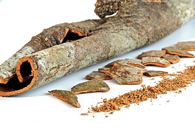 Pictures of Saigon Cinnamon (Vietnamese Cinnamon)