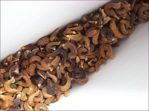 Calendula Officinalis Seed Image