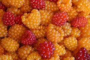 Salmonberry Picture