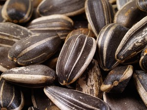 Images of Sunflower Seed