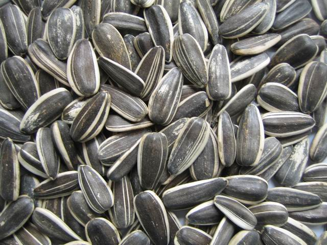 Photos of Sunflower Seed