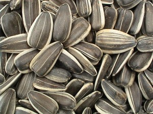 Pictures of Sunflower Seed