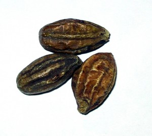 Terminalia chebula (Haritaki) Picture