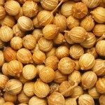 Photos of Coriander Seeds (Coriandrum sativum)
