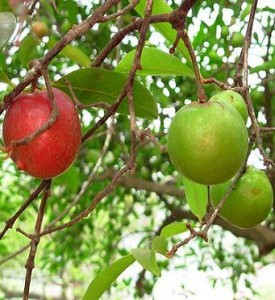 Images of Kokum