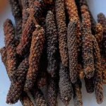 Pictures of Piper Longum (Long pepper)