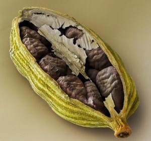 Green Cardamom Seeds Image