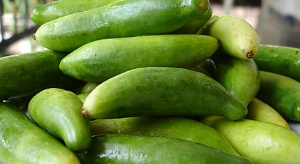 Images of Ivy Gourd