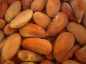Jackfruit Seeds Image