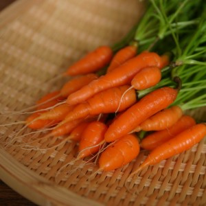 Baby Carrot Picture