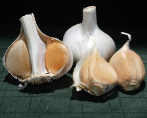 Photos of Elephant Garlic